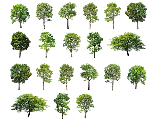 20 various trees