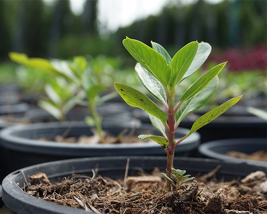 Tree seedlings in pot